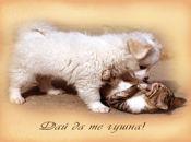 Дай да те гушна