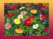 Букет от пролетни цветя!