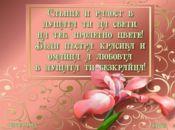 розов ирис за цветница