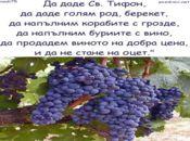 Благословене на реколтата грозде –Честит Трифонов Ден!
