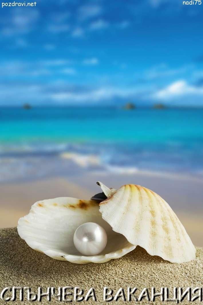 Перлена мида